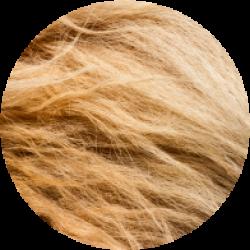 lion-fur
